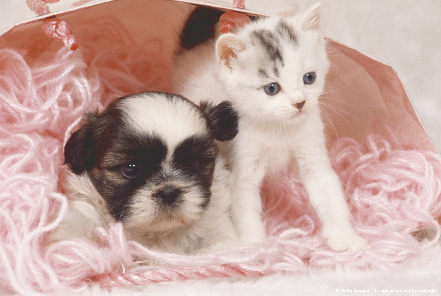 Puppy and Baby Cat