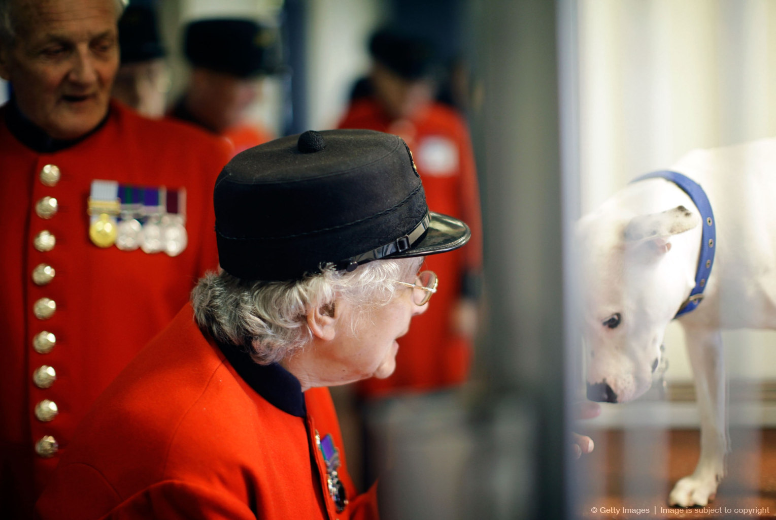 Battersea Dogs Home And Chelsea Pensioners Join Forces To Look After Animals